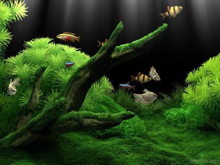 Скачать бесплатно рабочий стол dream aquarium 1.2592 rus. . Dream aquarium